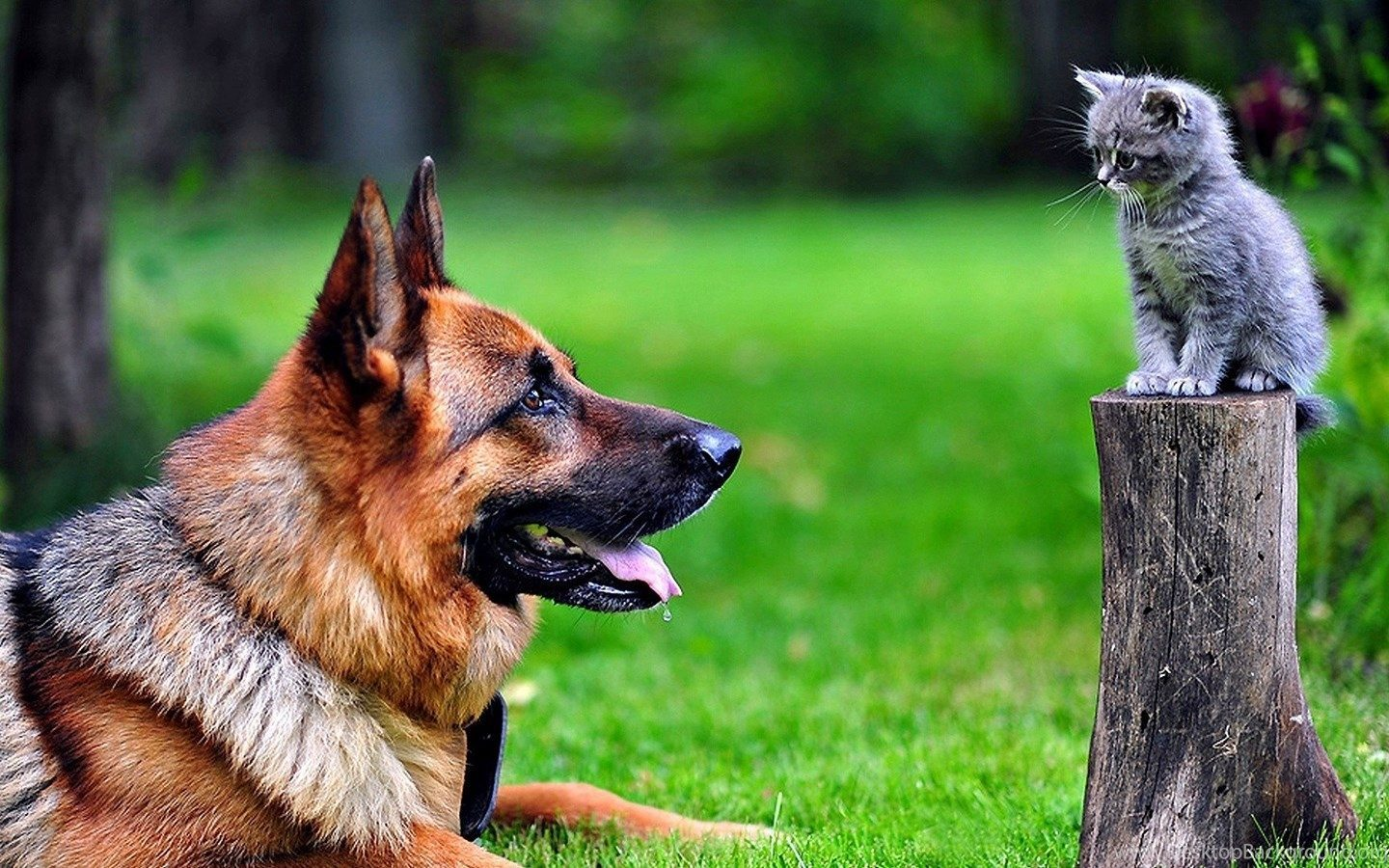 954537_hd-cute-dog-and-cat-wallpapers-hd-1920-1080-full-size_1920x1080_h